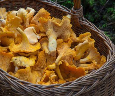 fungus-1194380_1920