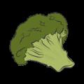 brokul-dietetyk-kliniczny