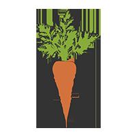 marchewka-dietetyk-kliniczny